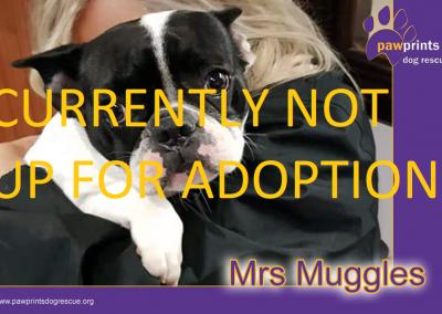 Mrs Muggles