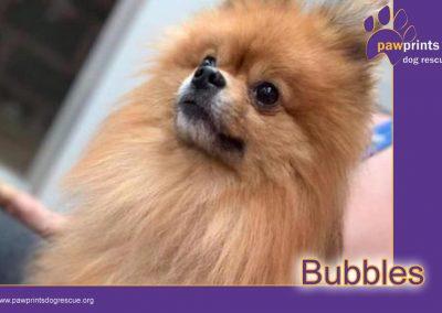 Bubbles – Coming Soon