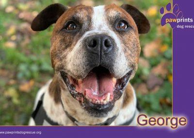 Gentle George