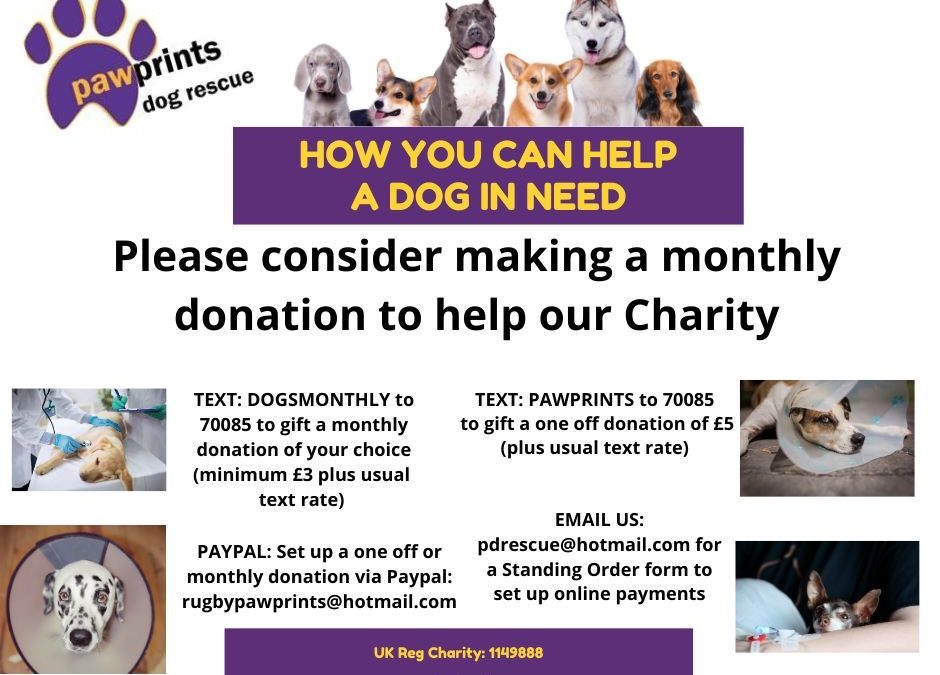 HOW CAN YOU HELP A DOG IN NEED