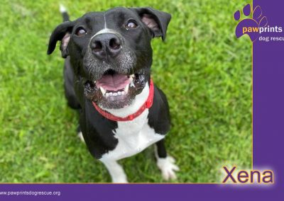 Xena (RESERVED)