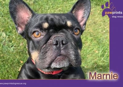 Marnie (Needs Special Home Requirements)